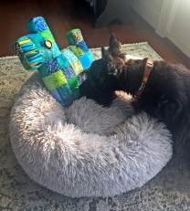 Ranger meets Patchwork Scottie.